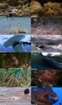 دانلود مستند مرگبارترین قاتلان زیر آب NG – Worlds Deadliest : Underwater Killers