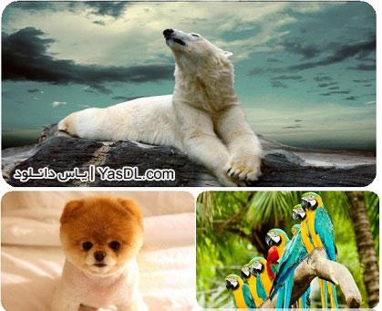 نتیجه تصویری برای دانلود والپیپر حیوانات