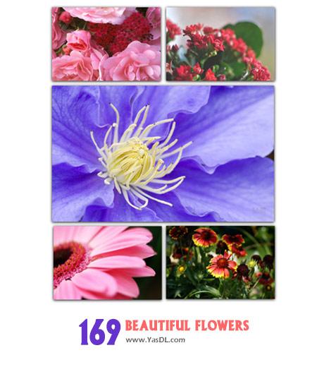 دانلود مجموعه 169 والپیپر گل Wallpapers & Photo Beautiful Flowers