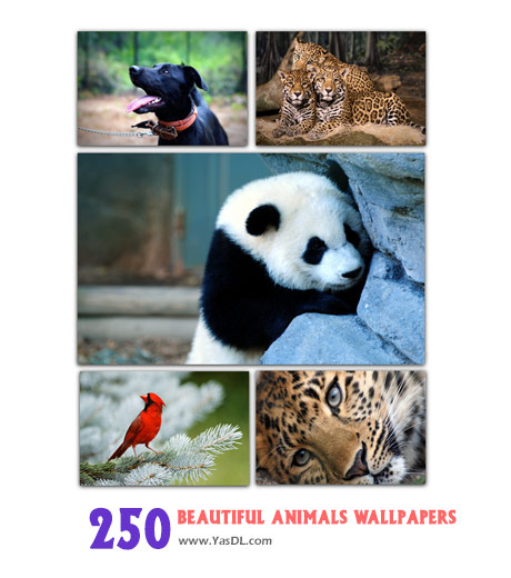 دانلود مجموعه 250 والپیپر حیوانات Beautiful Animals Wallpapers