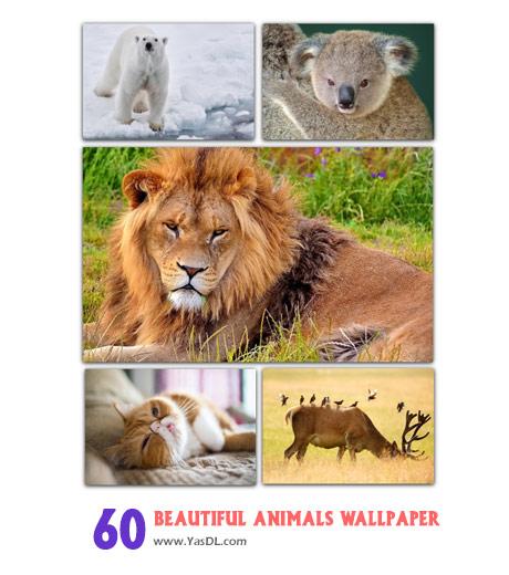 دانلود مجموعه 60 والپیپر حیوانات زیبا Beautiful Animals Wallpapers