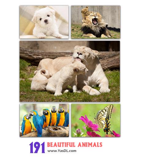دانلود مجموعه 191 والپیپر با موضوع حیوانات Beautiful Animals Wallpaper