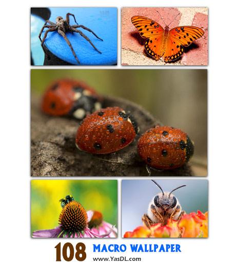 دانلود مجموعه 108 والپیپر گل ها و حشرات Marco Wallpaper