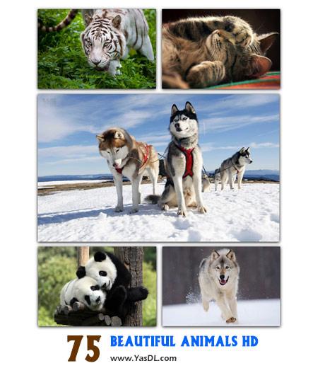 دانلود مجموعه 75 والپیپر حیوانات زیبا Beautiful Animals HD Wallpapers