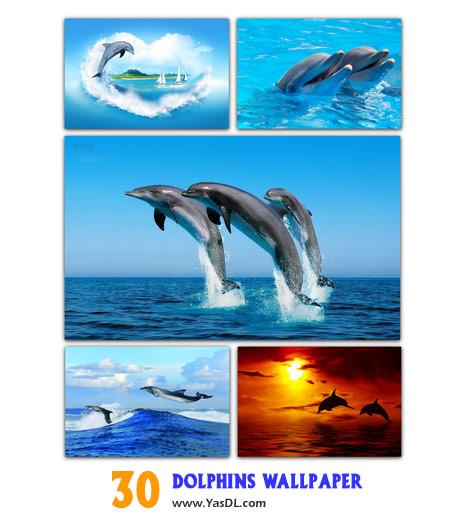 دانلود مجموعه 30 والپیپر از دلفین ها Dolphins Wallpaper