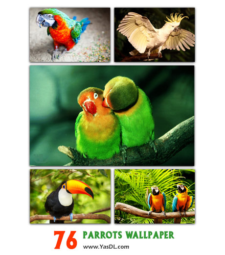 دانلود مجموعه 76 والپیپر طوطی Parrots Wallpaper Pack