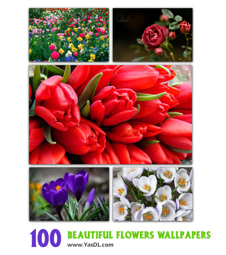 دانلود مجموعه 100 والپیپر گل های زیبا Beautiful Flowers Wallpapers