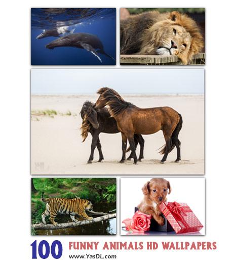 دانلود مجموعه 100 والپیپر حیوانات بامزه Funny Animals HD Wallpapers