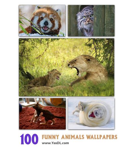 دانلود مجموعه 100 والپیپر حیوانات Funny Animals HD Wallpapers