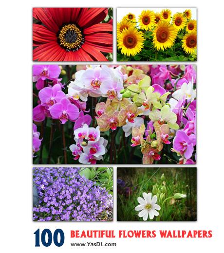 دانلود مجموعه 100 والیپیپر گل Beautiful Flowers Wallpapers