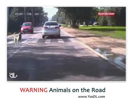 دانلود کلیپ تصادف حیوانات در بزرگراه ها