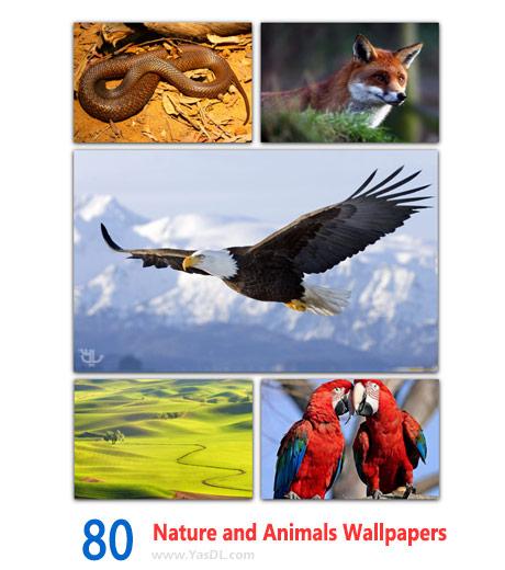 دانلود 80 والپیپر طبیعت و حیوانات Nature and Animals Wallpapers