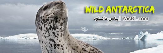 دانلود مستند National Geographic Wild Antarctica - نشنال جئوگرافیک حیات وحش جنوبگان