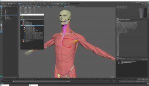 Ziva Dynamics Ziva VFX.cover1  300x174 - دانلود Ziva Dynamics Ziva VFX 1.922 for Maya x64 - پلاگین طراحی آناتومی کاراکترها در مایا